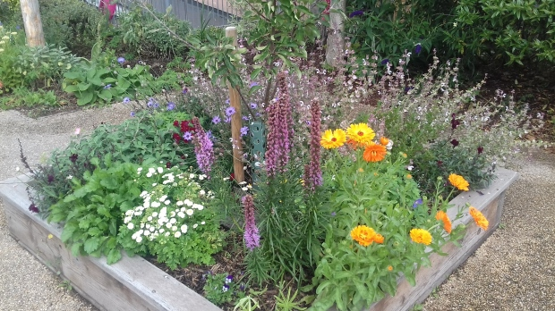 Join the garden judges – Our Neighbourhood